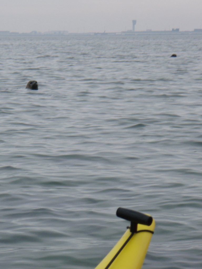 The seals by the kayak