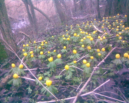 Spring flowers in the forrest