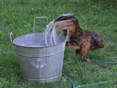 Water born dog