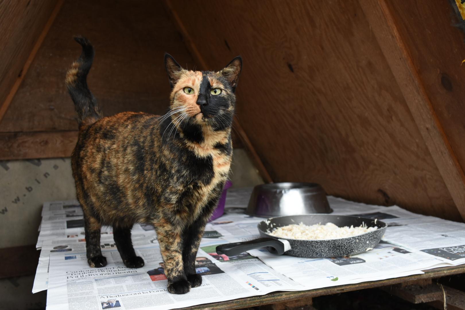 Schizophrenic  coloured cat