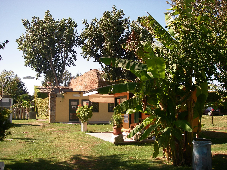 Camping San Nicolò, bar and reception with banana palm