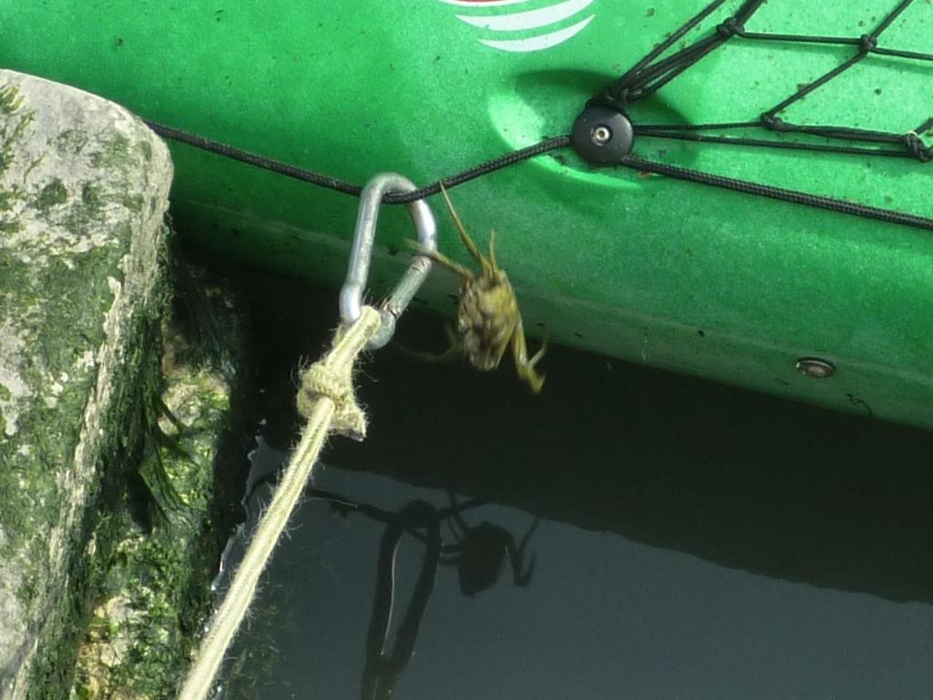 Crab jump (2)