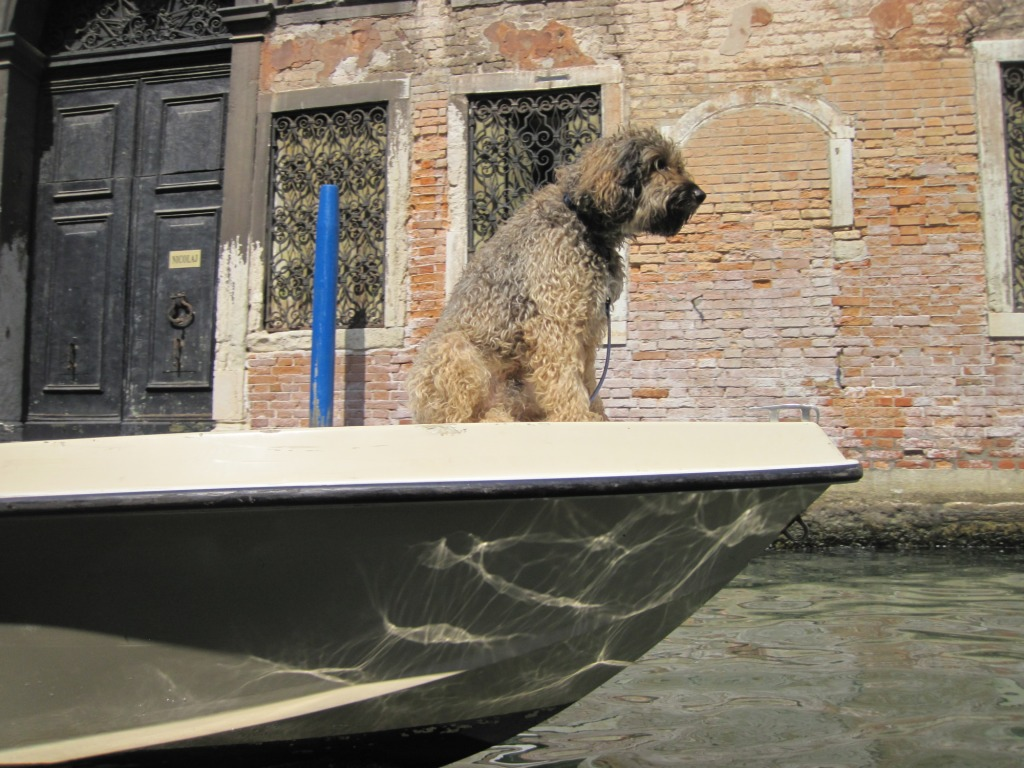 Dog sitting on boat - 2